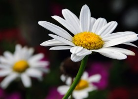 The Promise of Daisy
